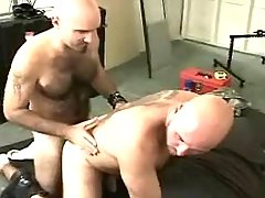 Bear gay sucks calm companion on floor