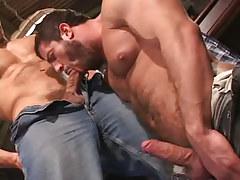 Bear gay sucking appetizing cock